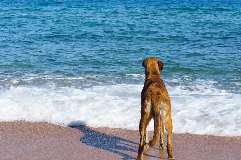 Dogs Summertime Animal Animal Themes Animals Beach Beachphotography Blue Sky Daylight Dog Dogslife Domestic Animals Nature_collection Non-urban Scene One Animal Out Pet Pets Portrait Sand Dune Waterfront Pet Portraits The Week On EyeEm Been There. Done That. Summer Exploratorium