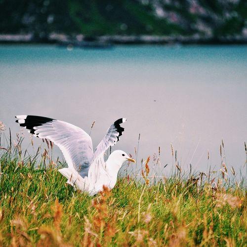 Image of bird near water