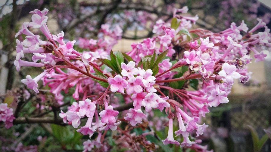Spring Photo Colors Zielony Las Nature Colors Springtime Nature Beautiful Nature Dark Pink By Motorola Spring Flowers
