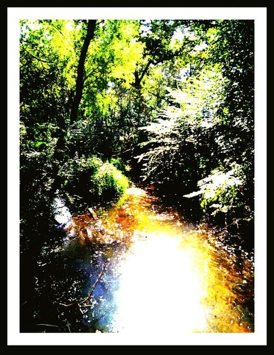 Creek,. Wooded Creek. Nature