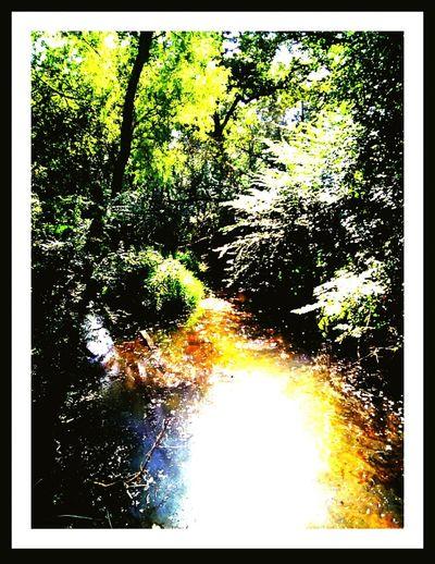 Creek,. Wooded Creek. Nature