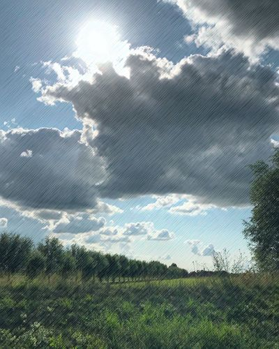Cloud - Sky Day Plant Nature Sky No People Beauty In Nature