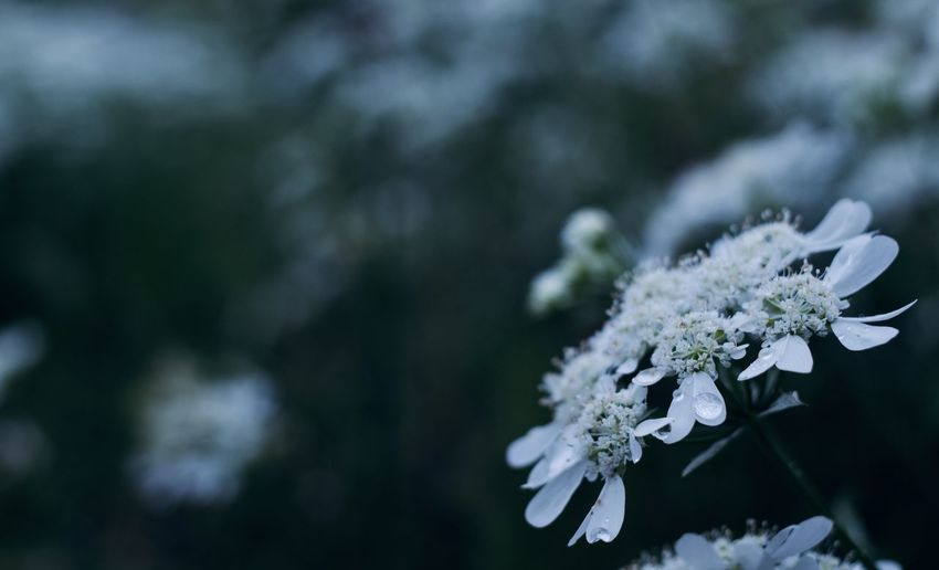 Plant Flower Flowering Plant Beauty In Nature Growth Fragility Vulnerability  Freshness Day Nature Close-up No People Outdoors Flower Head Rainyseason Macro Photography Nature_collection Nature Photography Nature Rain RainDrop Rainy Days Japan Green Color Plants