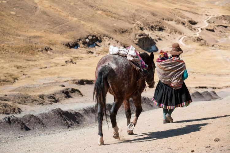 Rainbow Mountain Adult Animal Animal Themes Arid Climate Baby Day Desert Domestic Animals Hike Horse Mammal One Person Outdoors Peru Sand Walk Working Animal
