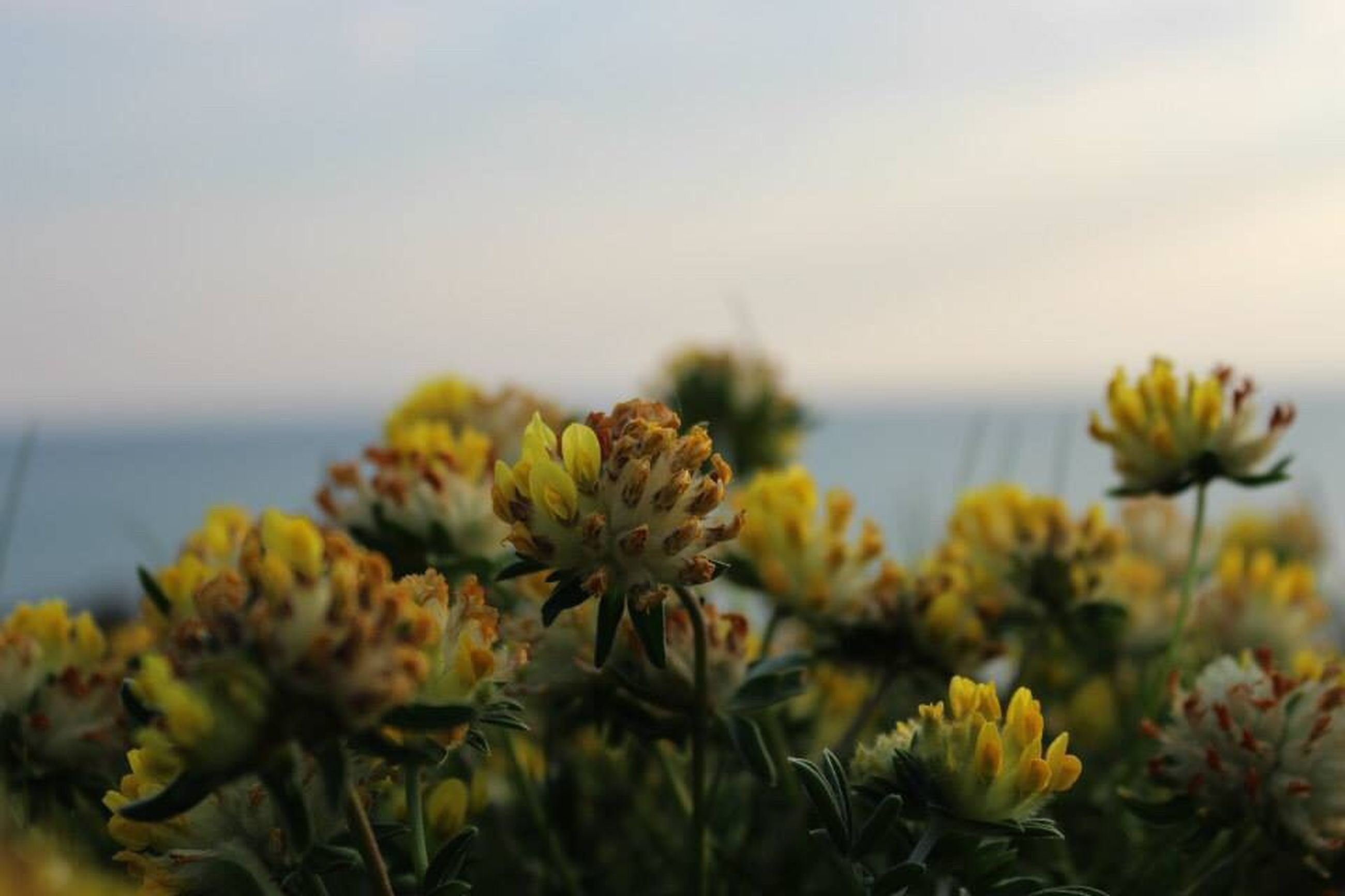 nature, growth, plant, focus on foreground, beauty in nature, flower, close-up, sea, outdoors, no people, sky, fragility, day, water, freshness