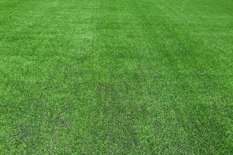 Green meadow grass field for football Grass Green Color Backgrounds Plant Sport Lawn Full Frame Field Soccer Nature American Football Field Playing Field No People Soccer Field Textured  Land Day Copy Space Stadium Environment Outdoors Turf Springtime