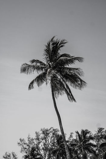 Fort Lauderdale  Beauty In Nature Black And White Black And White Photography Coconut Palm Tree Day Growth Low Angle View Nature No People Outdoors Palm Leaf Palm Tree Plant Sky Tranquility Tree Tree Trunk Tropical Climate Tropical Tree