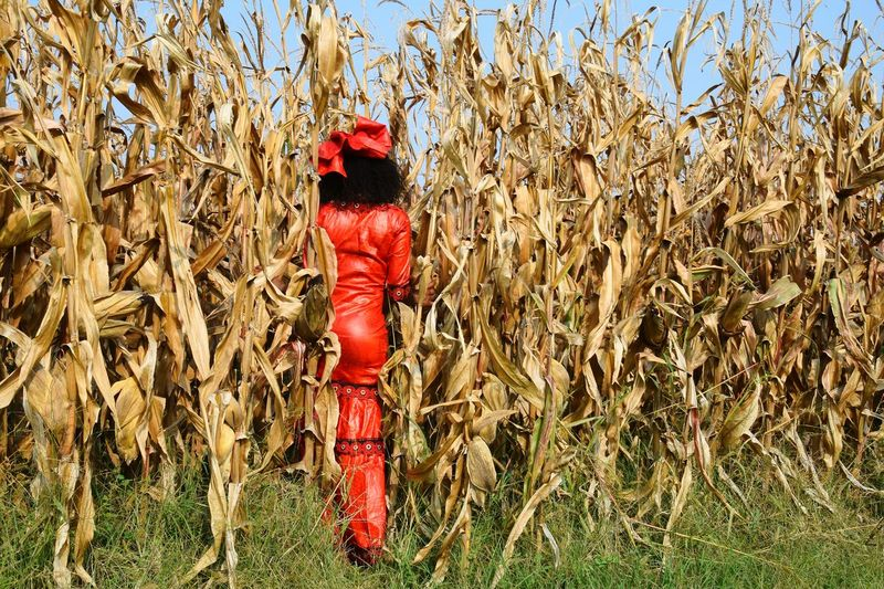 Corn Woman Red Standing Field Agricultural Field Cultivated Land Grass Area A New Beginning