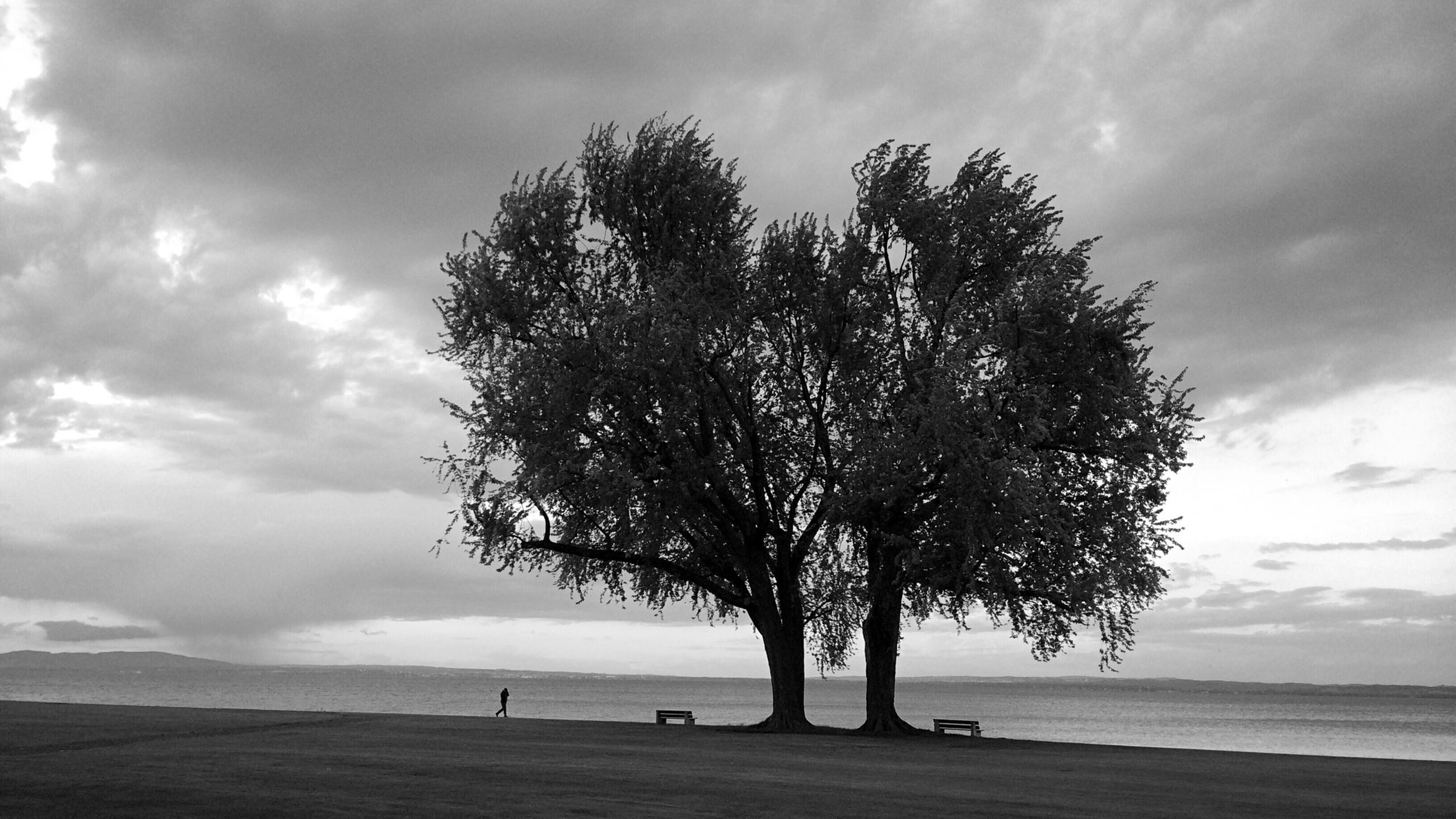 sky, tree, tranquility, tranquil scene, sea, scenics, horizon over water, beauty in nature, cloud - sky, beach, nature, water, cloud, cloudy, silhouette, shore, single tree, tree trunk, idyllic, growth
