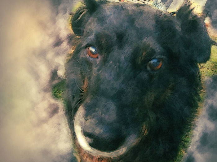 One of my dogs, photographed and later edited with Photoshop. Dog Photoshop Edit Eyes Feliz Animal One Animal Pets No People Looking At Camera