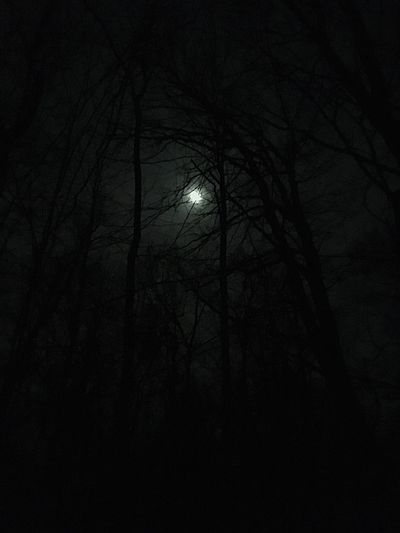 Night Tree Low Angle View No People Dark Plant Sky Nature Bare Tree Tranquility Moon Silhouette Illuminated Branch Beauty In Nature Outdoors Growth Land Moonlight Tree Trunk