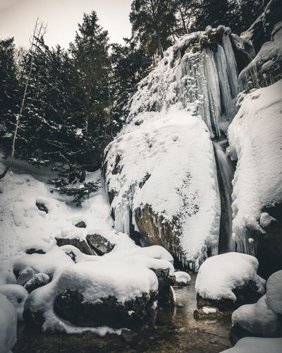 Snow covered rocks by trees
