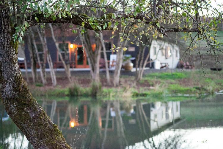 Branch I Love Where I Live! Outdoors PNW Vineyard PNWonderland Reflection Tree Vineyard Water Reflections WoodLand Showcase: November