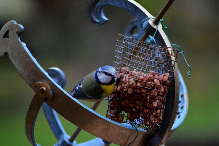 Close-up of bird on feeder