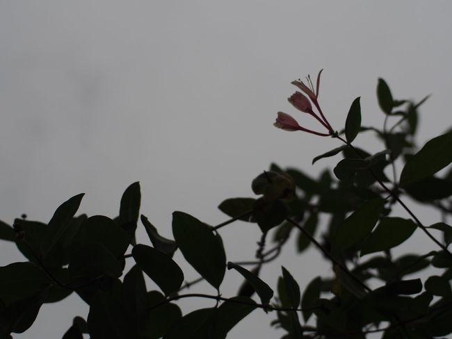 Flowers Flower Sky