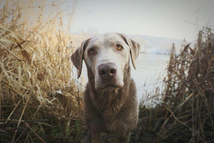 Portrait of dog at lakeshore