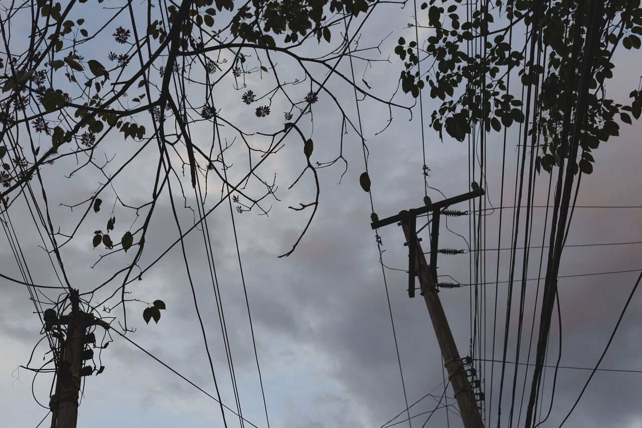 low angle view, cable, connection, sky, outdoors, day, no people, technology, electricity, tree, branch, electricity pylon, nature