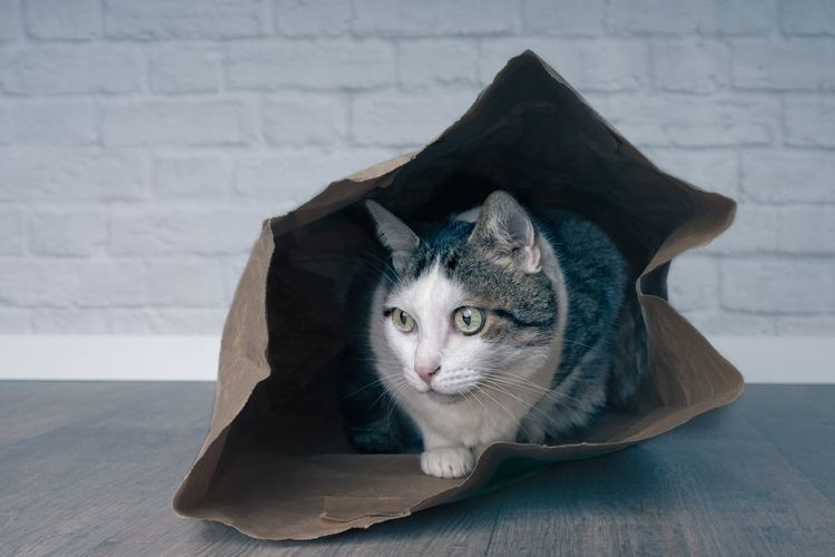 Portrait of a tabby cat in a paper bag.