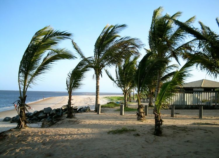Beach Beauty In Nature Clear Sky Coqueiros Horizon Over Water Nature No People Palm Tree Sand Sea Tranquil Scene