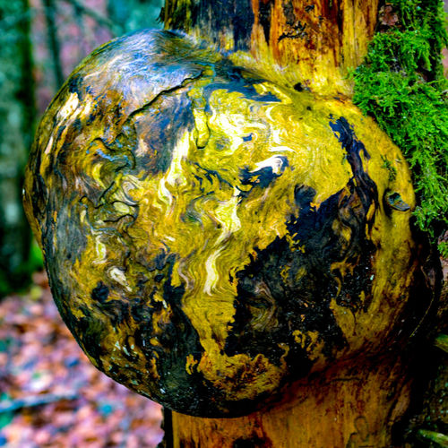 broussin Mappemonde Broussin Mappemonde Globe Foret Forest Wood Tronc Arbre Tree Textured  Outdoors Close-up Tree Nature Day No People