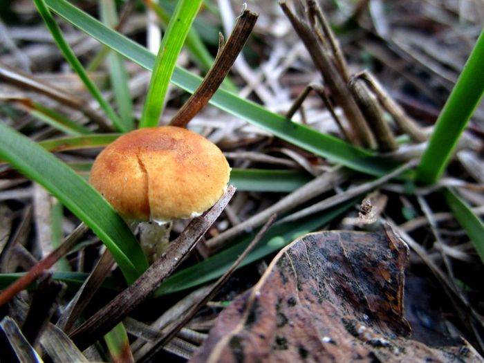 Nature Close-up Growth Freshness Grass Outdoors No People Beauty In Nature Mushroom Baby Mushroom