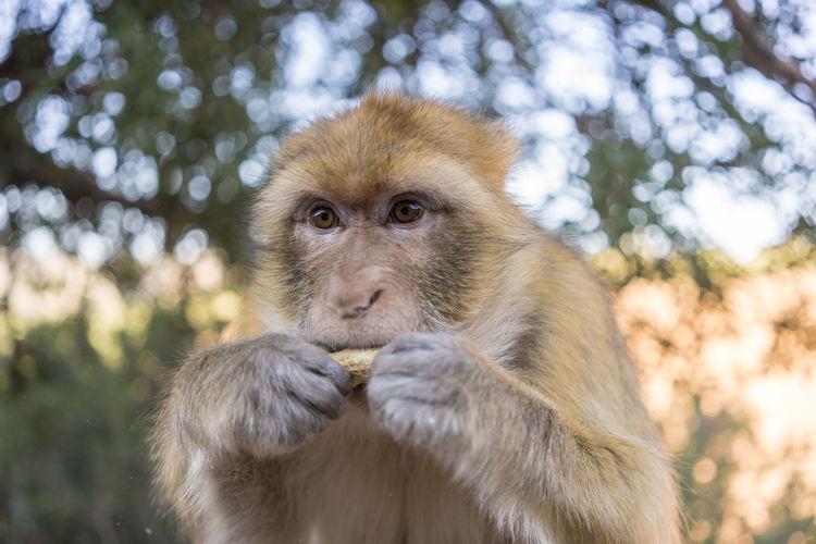 Portrait of monkey looking away in forest