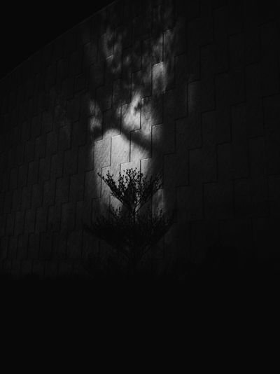 Shadow of tree on wall at night