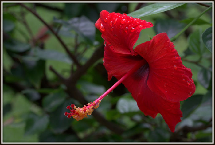 Flaura and Fauna of Alcudia Macro Nature Macro Photography Macro Hibiscus Hibiscus 🌺 Green Color Growth Plant Tree Beauty In Nature, Branch Branches And Leaves Close-up Day Flaura And Fauna Flaura And Fauna Of Alcudia Flower Head Flowers Fragility In Nature Leaf Nature No People Outdoors