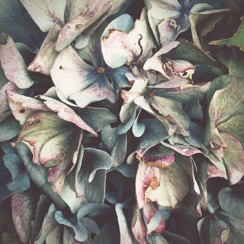 End of summer Flower Close-up Decay Petal Petals Still Life