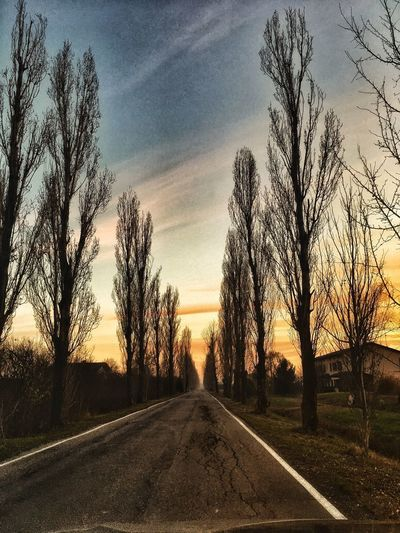 The Way Forward Road Tree Diminishing Perspective Bare Tree Sunset No People Scenics Nature Tranquil Scene Sky Transportation Landscape Beauty In Nature Tranquility Outdoors Day