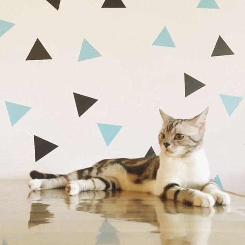 EyeEm Domestic Cat Hello World Hi! Day Cat Beautiful