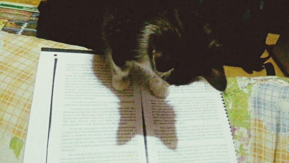 Adquirindo conhecimentos. Cat♡ Love Cute Felinos