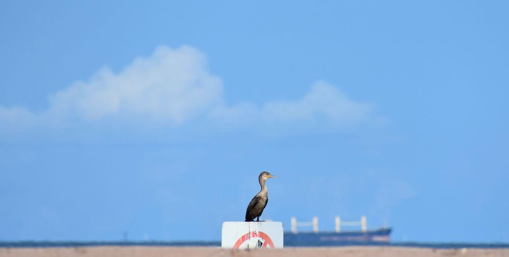 Seabird perching