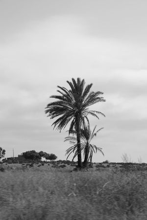 Blackandwhite Mohammedia Casablanca Maroc Nikon D5200 Nikon Tree Palm Trees