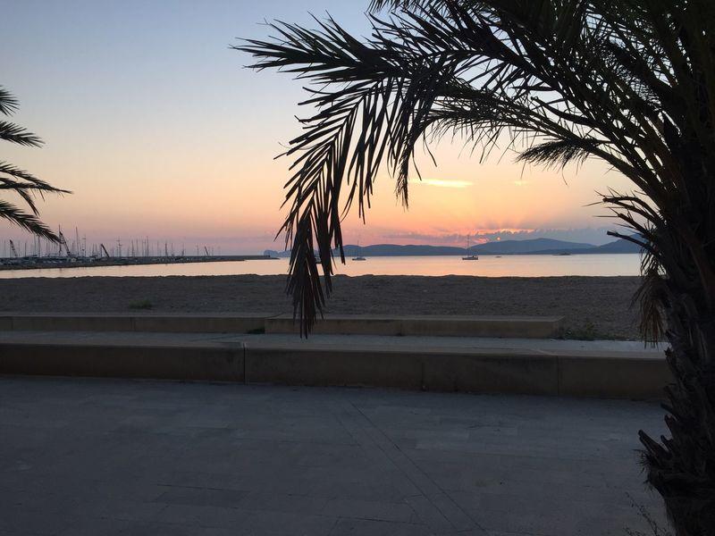 Sunset Rays Sunset Pink Orange Palm Tree Silhouette Palm Tree Sea Front Sardinia Promenade Beachfront Masts