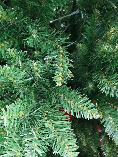 Full frame shot of tree branch