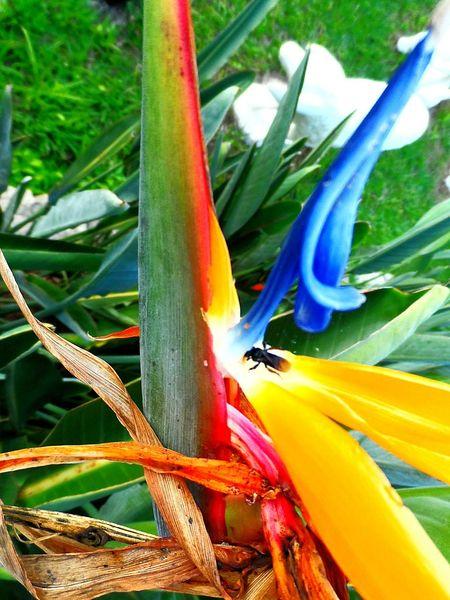Littlebee EyeEn Nature Lover Flawer In Magic Garden Photoarts Naturephotography Photograph Natureza Perfect Flowers Photoartist Jardimsecreto Flowers,Plants & Garden Flower Collection Beeandflower