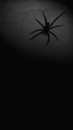 Spider Spiders Spidergirl Black&white Halloween Horrors