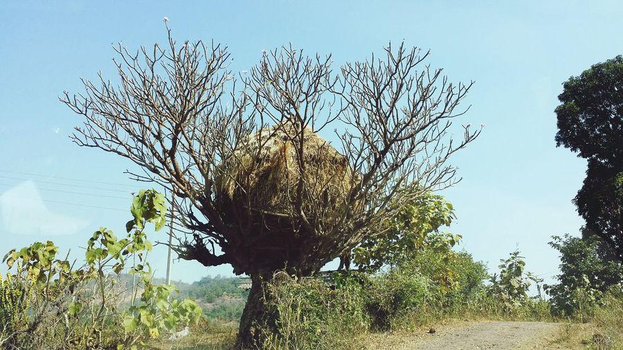 goth tree