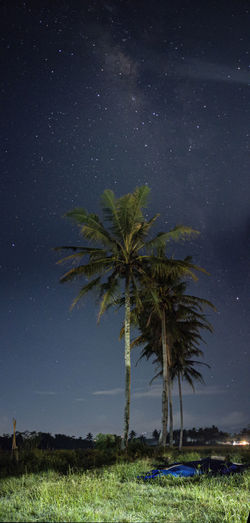 Palm trees on field against sky at night