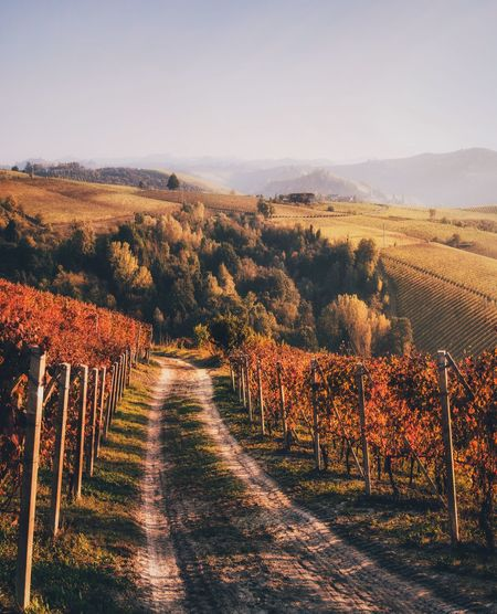EyeEm Best Shots EyeEmNewHere Lonelyplanet Outdoors Nikonphotography Hills Langhe Piedmont Italy EyeEm Nature Lover EyeEm Selects Bestoftheday Best EyeEm Shot Nature_collection Light And Shadow Rural Scene Landscape_Collection Landscape_photography Landscape Tranquil Scene Environment Tranquility Beauty In Nature Plant Scenics - Nature Tree Land Nature Sky No People Growth Vineyard Autumn The Way Forward Field Day Idyllic Change Winemaking