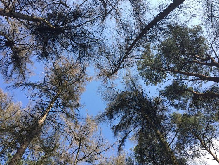 Rushmere Park Beautiful Nature