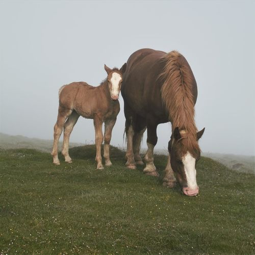 Horses Hungry Who Are You ? Animal Themes Field Grass Horse Mammal Mom Mommy! Nature Outdoors Son Standing Togetherness Young Animal