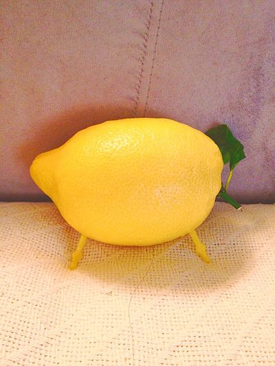 Lemon Piggie on the Couch 😉 Lemon Imaginary Pet