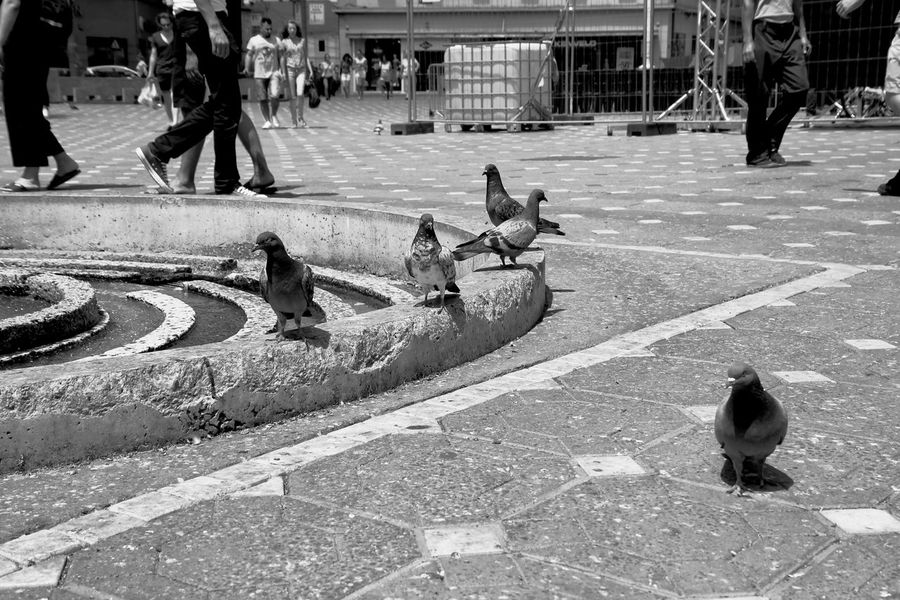 B&w Street Photography Full Length Pavement Paving Stone Pigeon Shadow Sidewalk Blackandwhite Taking Photos Of Tourists Candid Photography Black&white Black And White Black & White The Turist Timisoara