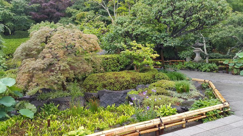 Beautiful Japanese garden Beautiful Garden Beauty In Nature Brick Close-up Cobblestone Day Design Environment Flower Flower Head Freshness Garden Grass Green Color Growth Japanese  Landscape Nature No People Outdoor Peaceful Plant Stone Path Sunlight Tree