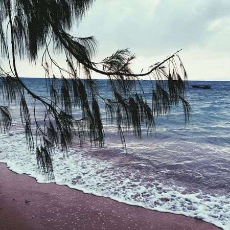 Sea Water Beach Horizon Over Water Tranquil Scene Scenics Tranquility Beauty In Nature Nature Sky Sand No People Outdoors Day Tree Wave