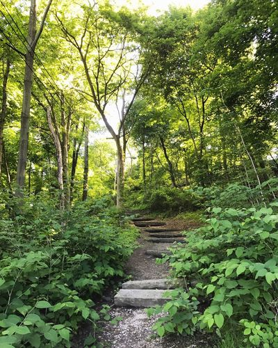 Tree Nature Forest Green Color Growth Tranquil Scene Tranquility Beauty In Nature Outdoors Scenics Day Lush Foliage No People Leaf Plant Travel Destinations Sky Stairs