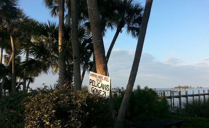 All is not well in paradise Indian River Lagoon Signs Of The Times Environmental Problems Sebastian, Fl