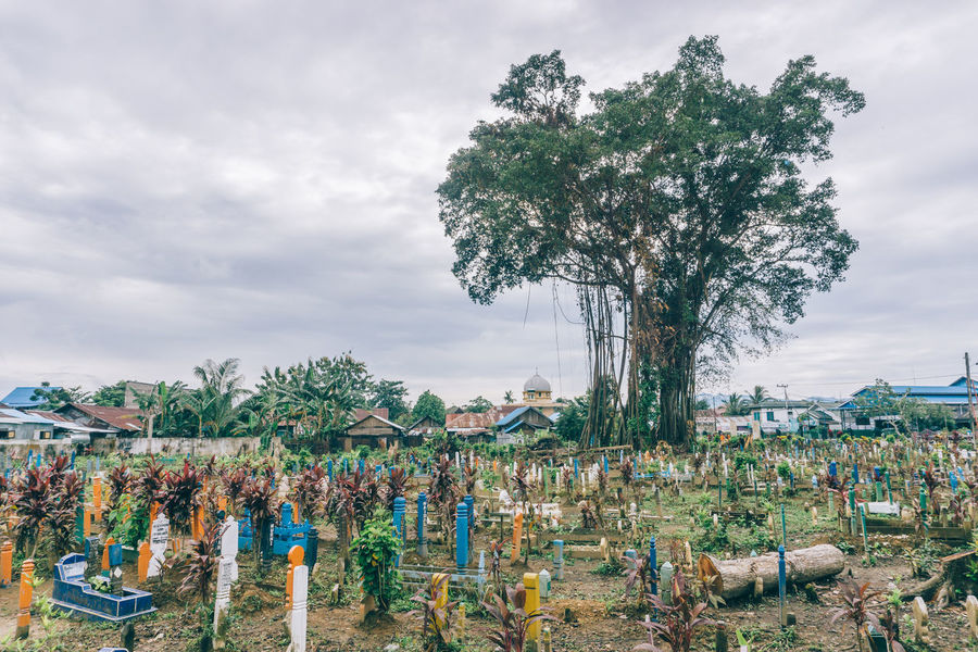 Huge Lonely Tree at Cemetery Cemetery Cloudy Cloudy Skies Cloudy Sky Day EyeEmNewHere Full Length Landscape Large Group Of Objects Lonely Masjid Mosque Multi Colored Nature Outdoors Tree Long Goodbye The Secret Spaces The Great Outdoors - 2017 EyeEm Awards